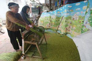 Autumn Green Sticky Rice In Hanoi Village