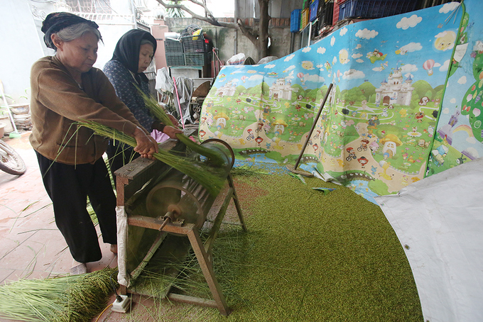 Autumn Green Sticky Rice In Hanoi Village